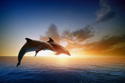 Vinilo Delfines saltando