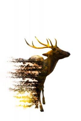 Vinilo Día Mundial de la Vida Silvestre Conceptos ambientales y de vida silvestre