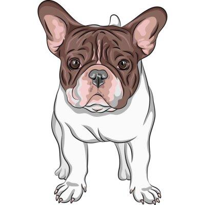 Vinilo dibujo vectorial perro doméstico raza Bulldog Francés