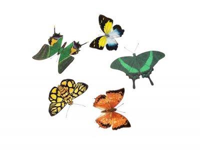 Vinilo diseño de la mariposa