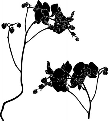 Vinilo Dos bocetos de ramas de orquídeas en blanco