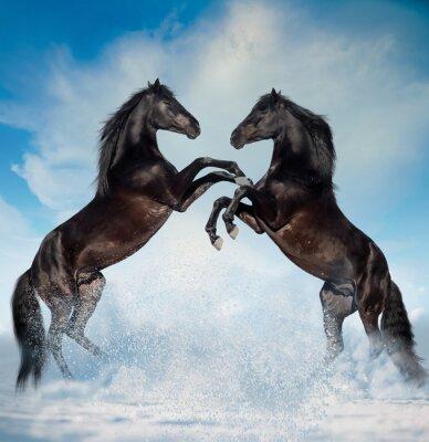 Vinilo Dos caballos criados negro en el fondo de invierno