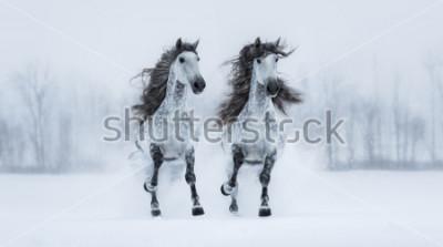 Vinilo Dos caballos grises de raza pura de raza larga criados en gris sobre un campo nevado.