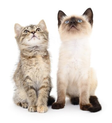 Vinilo Dos pequeños gatitos