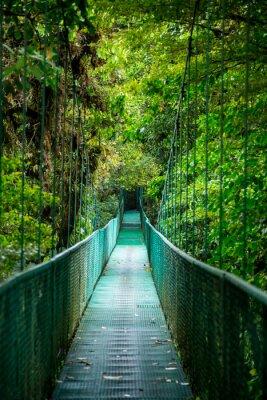 Vinilo Eine Brücke im Regenwald