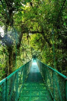 Vinilo Eine Brücke im Regenwald en Costa Rica