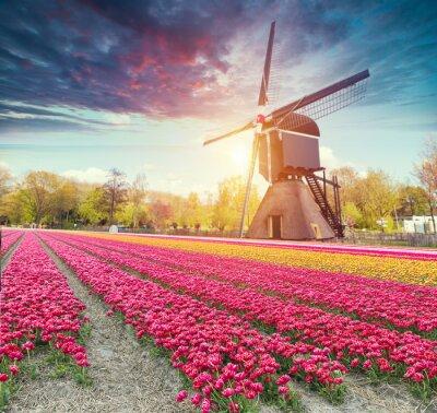 Vinilo El camino que conduce a los molinos de viento holandeses del canal en Rotterdam. Holanda. Países Bajos