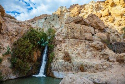 Vinilo El parque nacional y reservas Ein Gedi, Israel