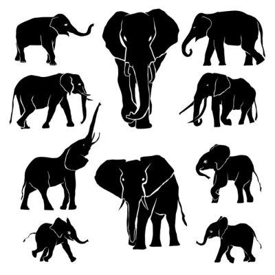 Vinilo Elefante silueta Paquete