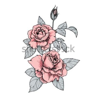 Vinilo Elegante viñeta con rosas rosadas. Dibujado a mano ilustración vectorial aislado en estilo vintage
