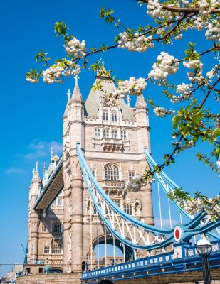 Vinilo Famous landmark of London Tower Bridge in spring season with white apple tree flowers in composition - England, United Kingdom