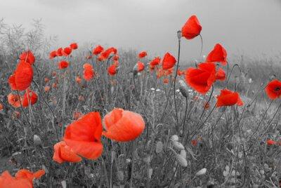 Vinilo Feld mit roten Mohnblumen en el Sommer