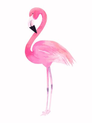 Vinilo Flamenco rosado de la acuarela. Ilustración del vector
