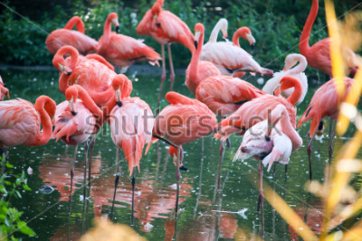 Vinilo flamingo on the pond