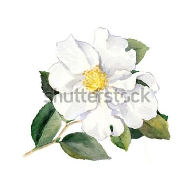 Vinilo Flor blanca. Acuarela botánica ilustración