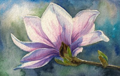 Vinilo Flor de la magnolia en branch.Watercolors.