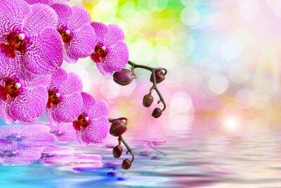 Vinilo Flor de la orquídea de cerca