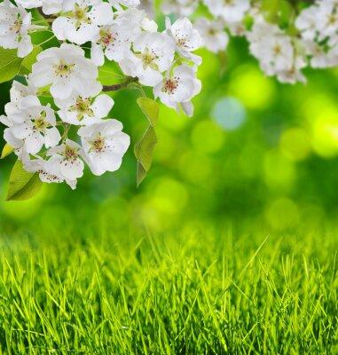 Vinilo Flor de primavera y hierba