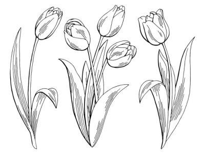 Vinilo Flor de tulipán gráfico negro blanco aislado boceto ilustración vectorial