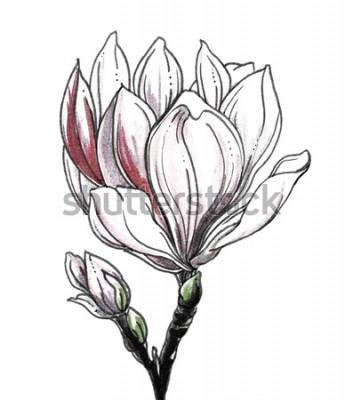 Vinilo Flor tropical de la flor de la magnolia blanca en el fondo blanco. Ejemplo monocromático blanco y negro botánico dibujado mano de la acuarela para casarse la impresión, tarjeta, invitación. Estilo jap