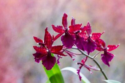 Vinilo Floración rama de las orquídeas con flores marrón