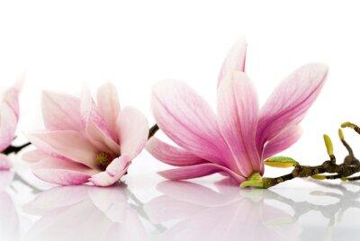 Vinilo Flores