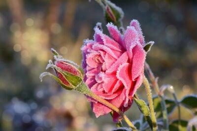 Vinilo flores 529