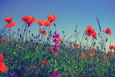 Vinilo Flores de amapola contra el cielo