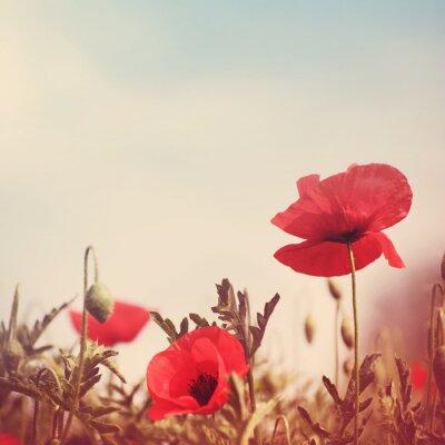Vinilo Flores de amapola imagen estilizada retro