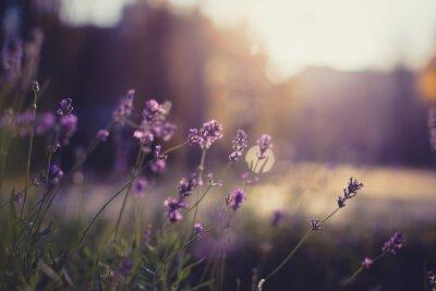 Vinilo Flores de cerca