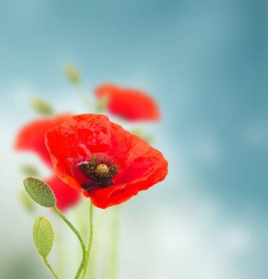 Vinilo Flores de la amapola