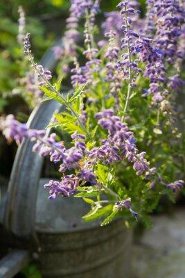 Vinilo Flores de lavanda en jardín Regadera