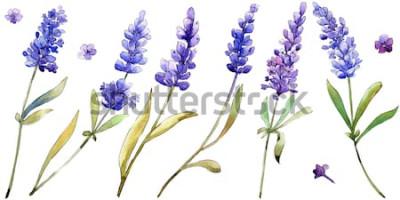 Vinilo Flores de lavanda púrpura acuarela. Flor botánica floral. Elemento de ilustración aislada. Aquarelle wildflower para fondo, textura, patrón de envoltura, marco o borde.