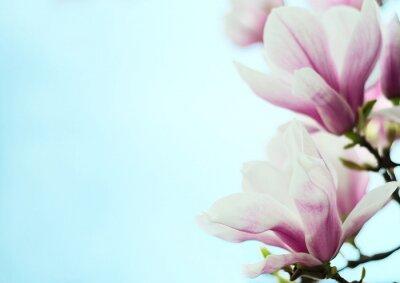 Vinilo Flores de magnolia sobre un fondo de cielo azul