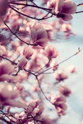 Vinilo Flores hermosas de la magnolia rosada