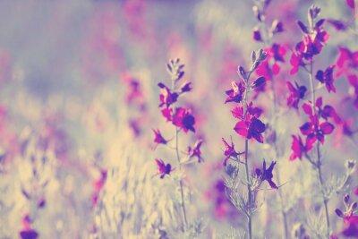Vinilo flores silvestres de color púrpura