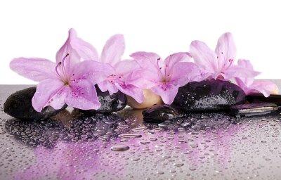 Vinilo flores y piedras negras con la reflexión