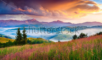 Vinilo Foggy summer sunrise in the Carpathian mountains. Colorful morning scene in the mountain valley. Beauty of nature concept background. Artistic style post processed photo.