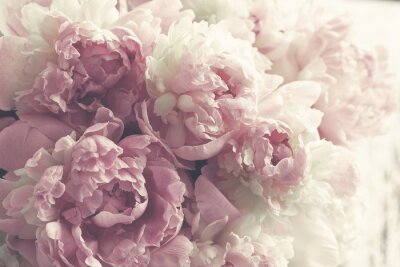 Vinilo Fondo de flores de peonía rosa esponjosa