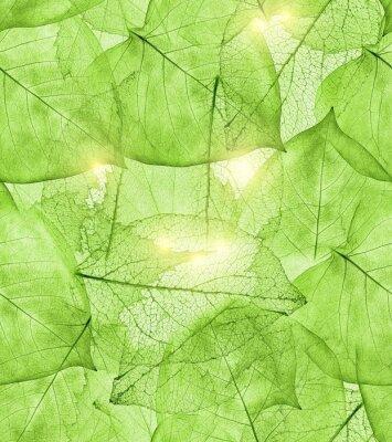 Vinilo Fondo de hojas verde oscuro