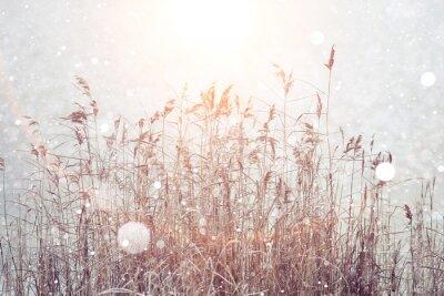 Vinilo Fondo de invierno borrosa, copos de nieve de hierba seca