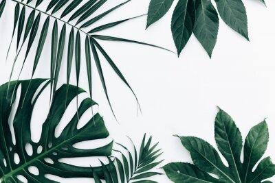 Vinilo Fondo de moda tropical. Deja sobre fondo blanco