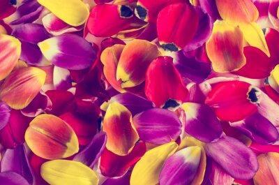 Vinilo Fondo de tulipanes pétalos