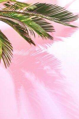 Vinilo Fondo pastel tropical de verano con la palma