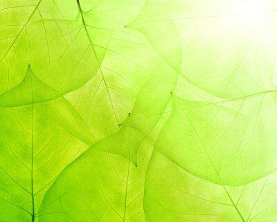 Vinilo fondo verde de las hojas delgadas