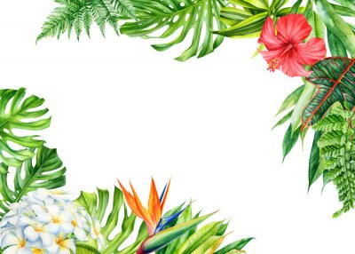 Vinilo frame, tropical leaves and flowers on an isolated background, greeting cards with space for text, watercolor painting,  floral design, plumeria, strelitzia, palms, monstera, ficus
