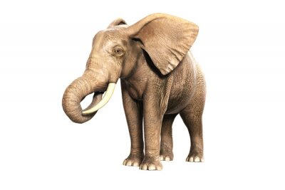 Vinilo Freigestellter Elefant am Fressen (gerandertes Bild)