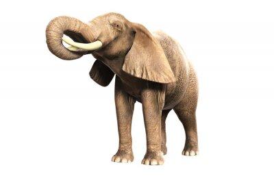 Vinilo Freigestellter Elefant mit erhobenem Rüssel (Gerberas Bild)