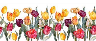 Vinilo Frontera horizontal floral. Tulipanes coloridos en el fondo blanco. Ilustración botánica. Pintura de acuarela.