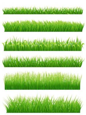 Vinilo Fronteras de la hierba verde fijadas en blanco. Ilustración del vector